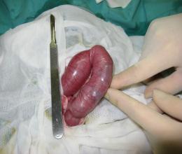 猫の腸内異物1