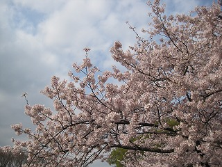 s-110410成田山新勝寺 横浜別院 033
