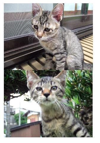 白と黒、子猫写真2枚合成 筆まめ使用