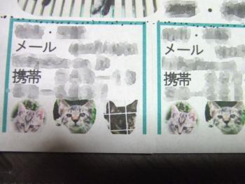 子猫チラシちぎる所ブログ用幅350