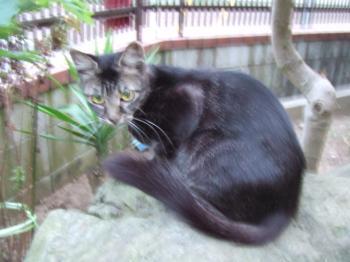 チビフサ子猫152 幅350 フサ石上振向きボケ