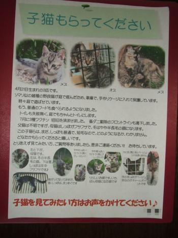 子猫チラシ自宅塀用・ブログ用 幅350
