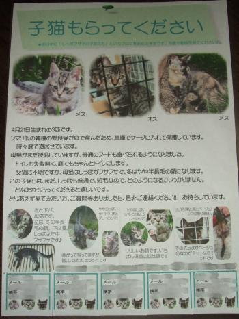 子猫チラシ・ブログ用 幅350