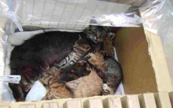 フサ目線と子猫箱で寝・手前チビ足、白顔あり0904トリミング幅350