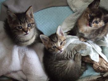 子猫寝床で3匹目線5-0921 幅350