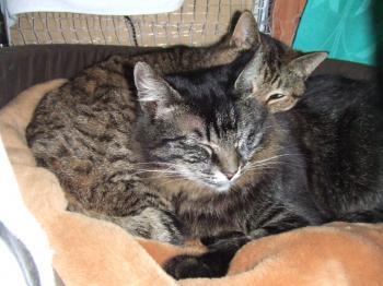 2010猫の日チーフサ寝床ラブラブ 1 2573_幅350