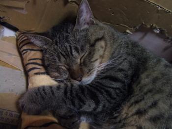 2010チー枕で寝る手添え11-3624_幅350