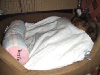 茶色ぬいぐるみ生地ベッド座布団下に茶コ12-3833_幅350