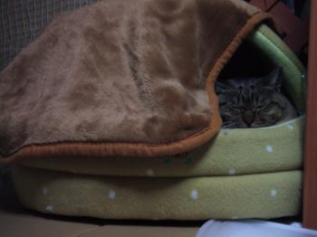 チー毛布掛けた黄色ベッドから顔おまんじゅう12-3969_幅350