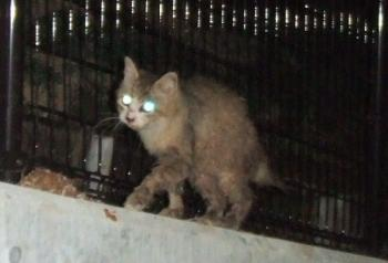 コロ塀の上歩く猫背、最初の頃4-20650トリミング幅350