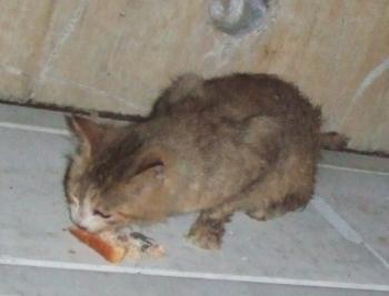 コロしっぽ毛カット4日後下でパン食べ4-120615トリミング幅350