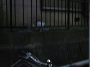 エサ場向かいのアパートのフェンスと、別の野良猫4-120649_幅350
