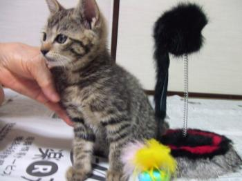 コチビ、スタンドネズミと。ココ===チビフサ子猫026幅350