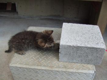コチビ、ブロックと同じ大きさ。コチビ==1254_幅350