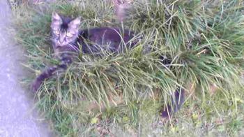 フサ竜のひげに埋まり寝そべる携帯フサ00216幅350