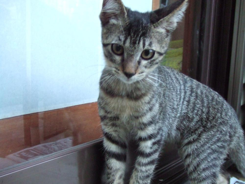 黒っちおすまし6-子猫112 幅1000