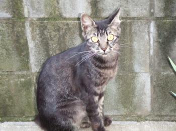 車庫門レール塀座るフサ・フラッシュ6-チーフサ子猫013 幅350