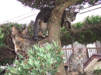 フサ子猫木登り、レオ前足垂らし5-1062_幅350
