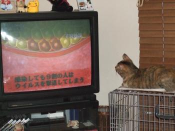 TVを見る1