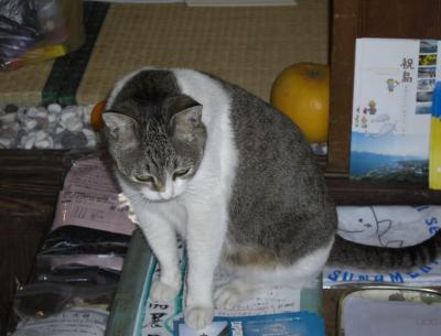 尾道CD屋さんのネコ1