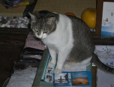 CD屋さんのネコ2