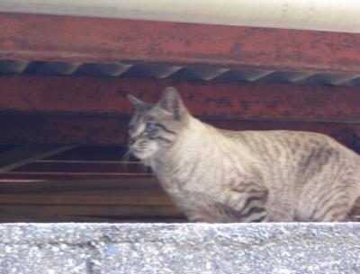 逃亡中のネコ9