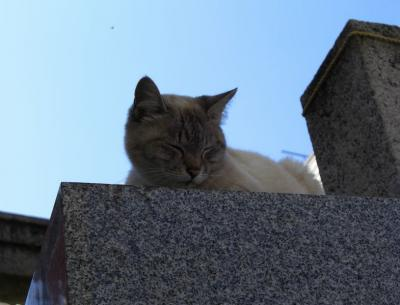 神社の居眠り猫10