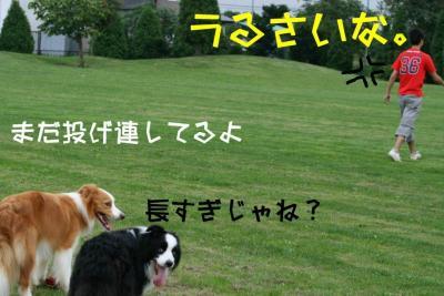 IMG_2959_sh01.jpg