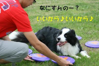 IMG_2971_sh01.jpg