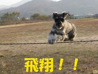 IMG_1992 飛翔!!