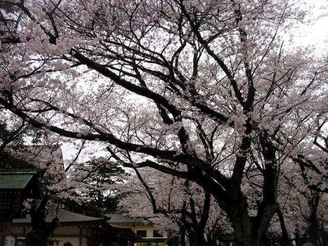 20年3月30日東京総会 026