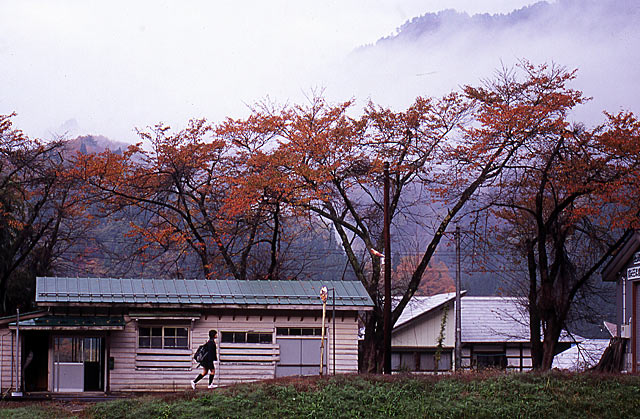 nakagawasakurakouyou