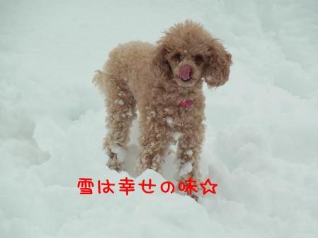 11_20110113141329.jpg