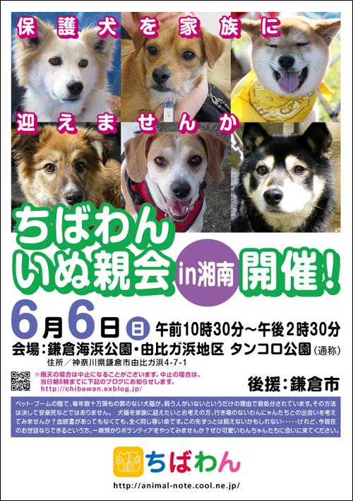犬の里親会 湘南 鎌倉