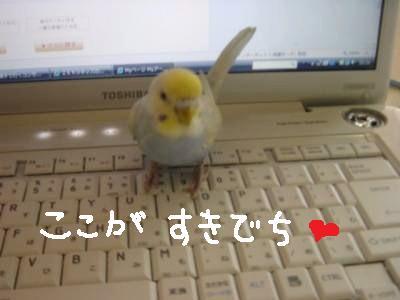パソコンピーちゃん