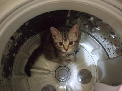 チョコ洗濯機に飛び込み