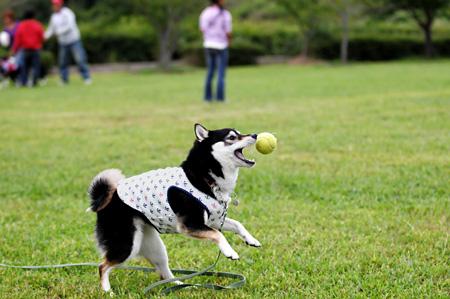 ボール遊びは