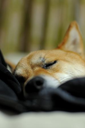 おやすみ~(もうあきらめ気味)