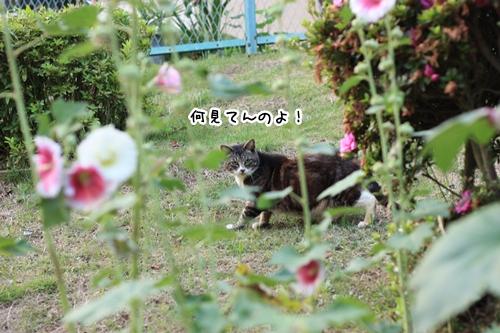 2009061910.jpg
