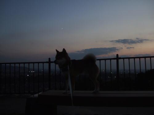 南の空に月