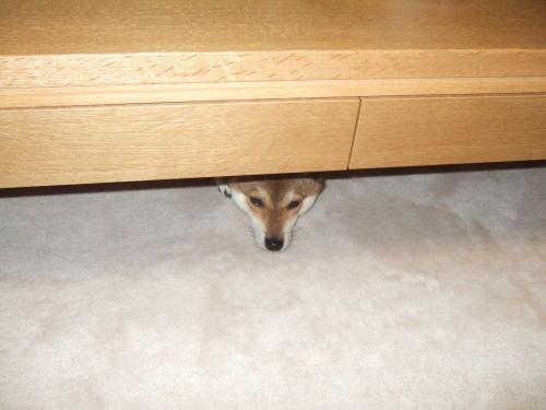 テーブルの下にチョコンとめろん