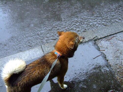 雨が耳にも入ってくるし
