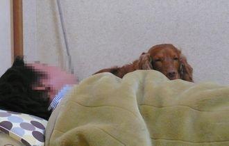 choco-futon-2.jpg