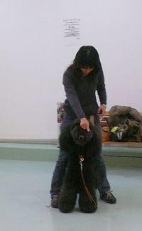 dogdance-2.jpg
