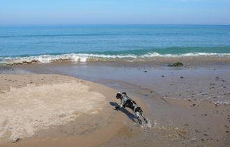 monzen-beach-1.jpg