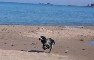monzen-beach-4.jpg
