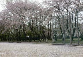 sakura-gurand.jpg