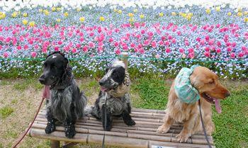 tulip-syuugou.jpg