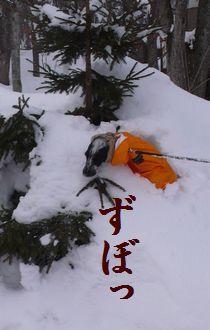 yuki-umari-ato.jpg