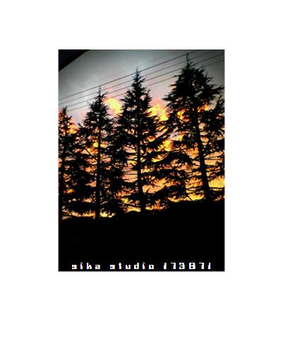 2005/08/14【木々の闘志】